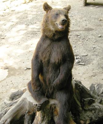 Праздник пробуждающегося медведя